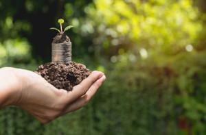 Auf einer Hand liegen Erde und Münzen, woraus eine Pflanze wächst.